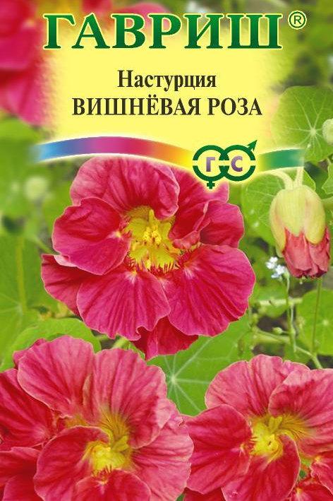 Цветы настурция Вишневая роза