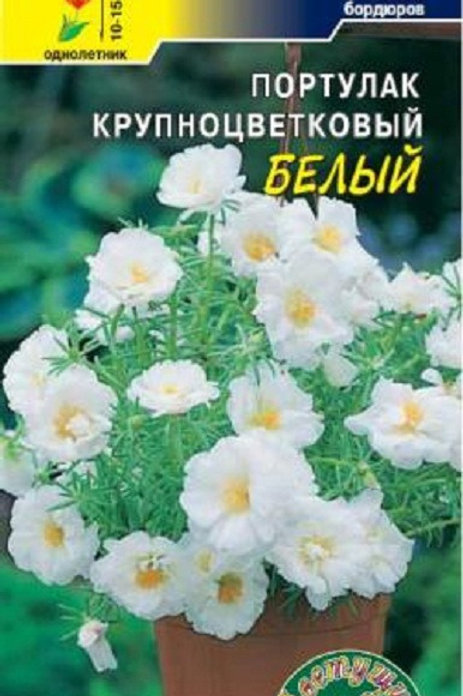 Цветы Портулак Белый