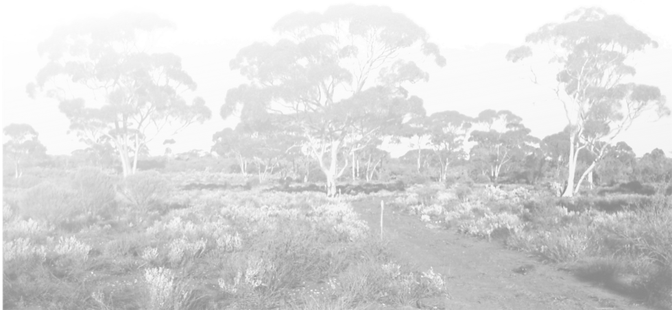 road with trees.png