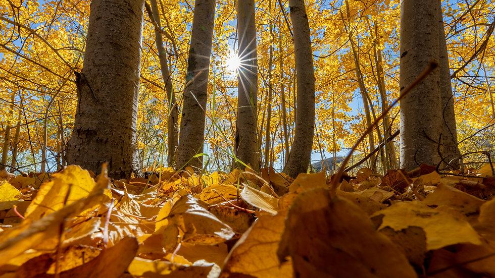 Autumn Sun Star Leaves