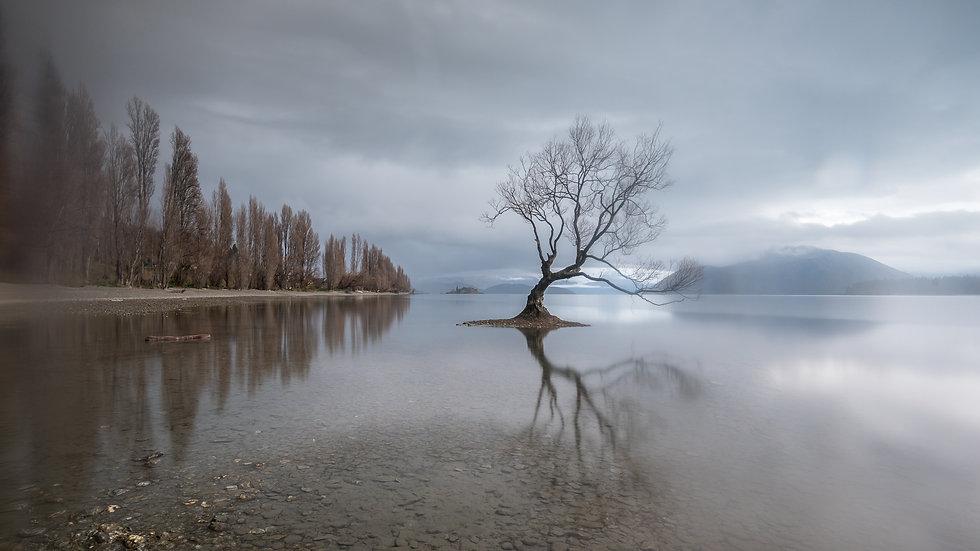 Wanaka Tree Grey