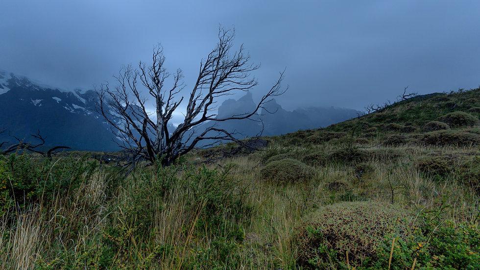 Patagonia Moody Tree