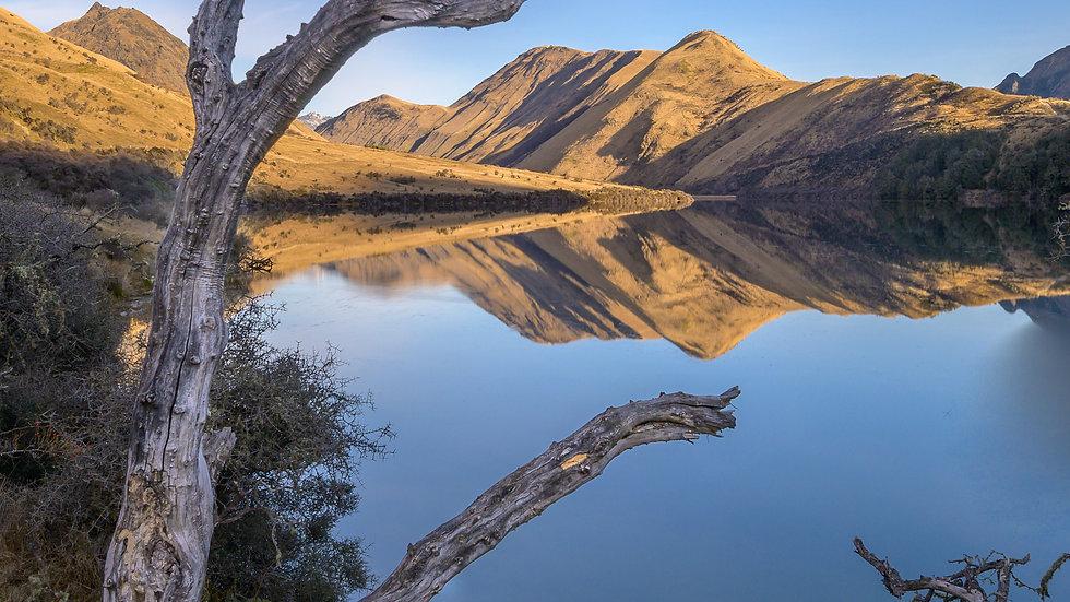 Moke Lake Tree