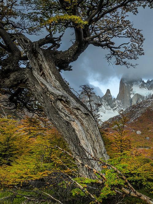 Poincenot Patagonia