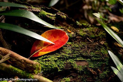Red Leaf-7675-.jpg