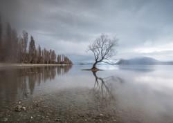 The Wanaka Tree-9601