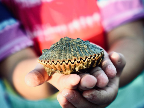 Why Scalloping Should Be On Your Bucket List