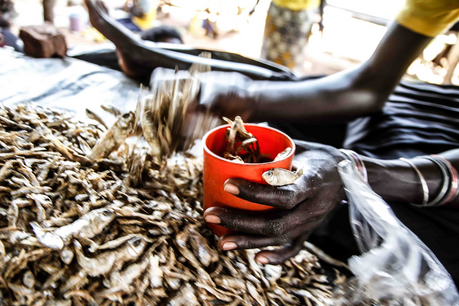 Female former child soldier who sells fish at a locak market