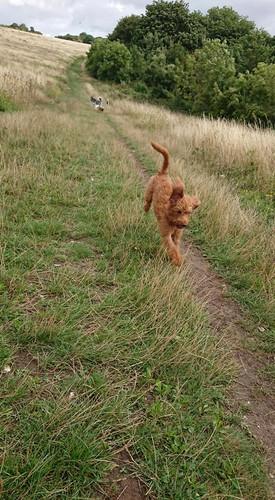 Buddy always running._