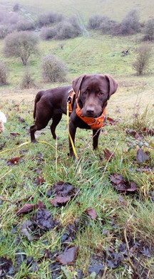 New dogs start on training lead