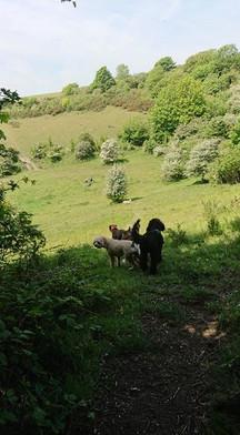 Walking on downland area in Bevingdean