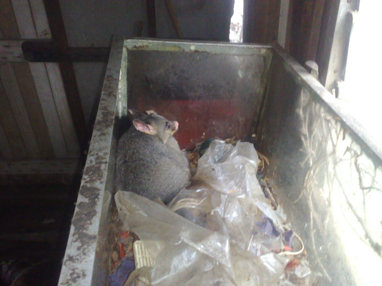 Possum Removal Melbourne Possum Removal Bird Removal And