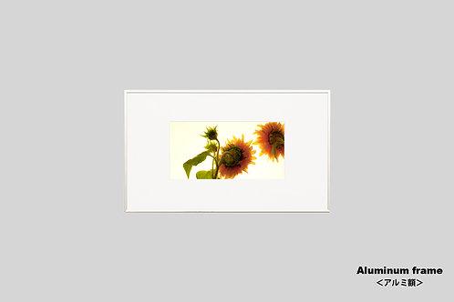 インテリア,写真,花,フラワー,ヒマワリ,ひまわり,インテリアフォト,アート,額入り,額装,オリジナルプリント,アートフレーム,フォトフレーム,おしゃれ,モダン,壁掛け,壁飾り,装飾,イエロー,黄色