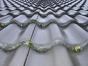 roof-cleaning-fl.jpeg