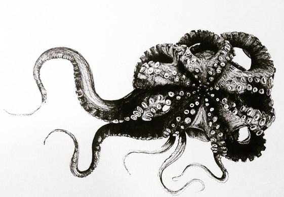 Mario the Octopus