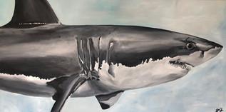 Umberto the Shark