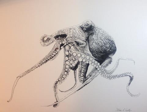 Salvo the Octopus