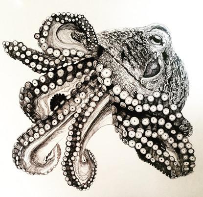 Luigi the Octopus