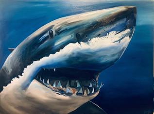 Sergio the Jazz Shark