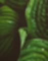 Screen Shot 2018-01-20 at 7.08.51 PM.png
