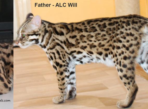 father ALC will.jpg