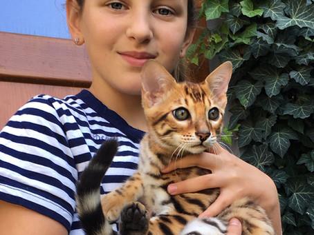 Kočka bengálská – Barevné variety