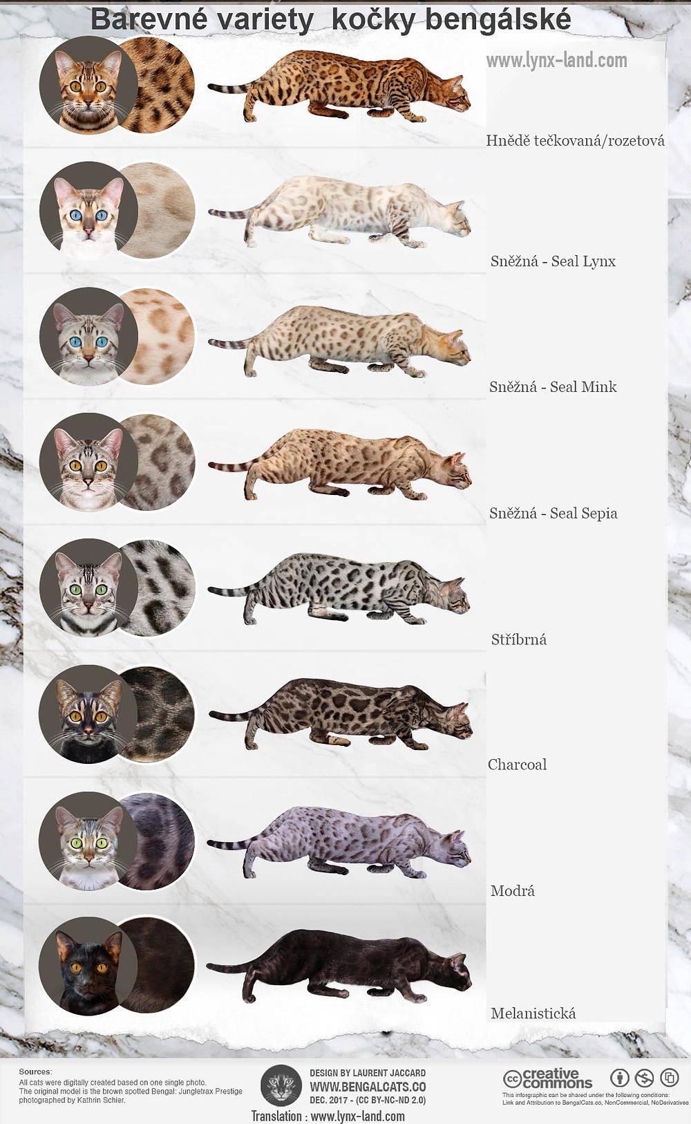 Kočka bengálská – barevné varianty