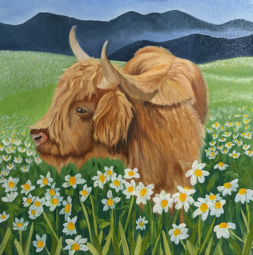 Highland Daisies 12x12 inch Painting