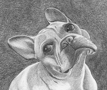 8X8 inch Custom Pencil Dog Portrait (1 Head)