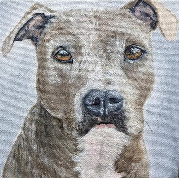 Lola - American Staffordshire Terrier
