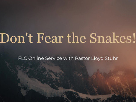Don't Fear the Snakes!