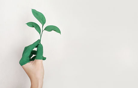 person-s-left-hand-holding-green-leaf-pl