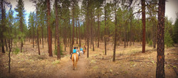 riverside forest pano EDIT
