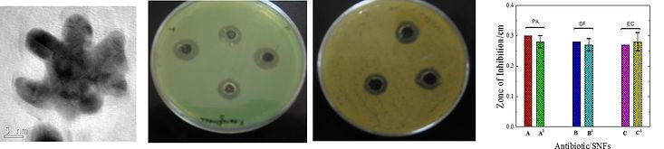 Antibacterial2.jpg