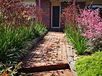 Kangaroo paw entrance landscaping near m