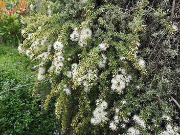 Landscaping Darley 5.jpg