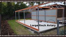 Large Custom Finch Aviary