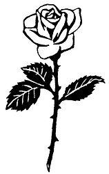 Rose-Blaetter.jpg