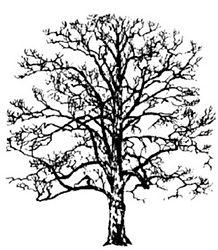 Baum-blattlos.jpg