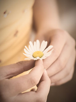 person holding white daisy flower_edited