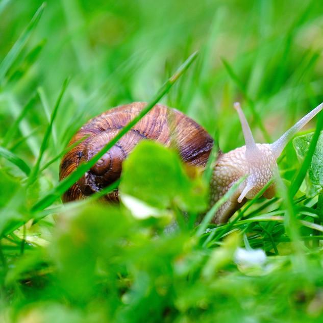 snail-4178349_1920.jpg