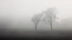 misty-trees-small-3