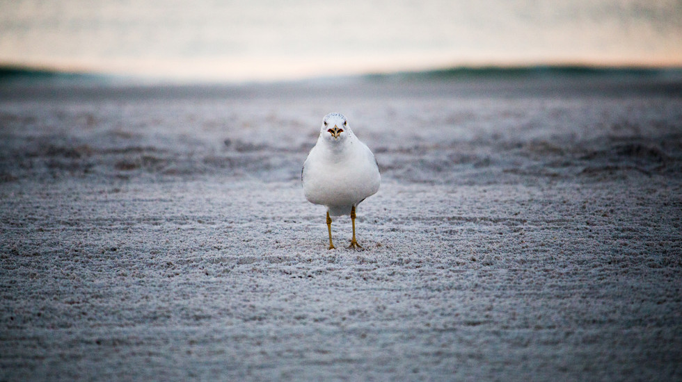 Attacking bird.jpg