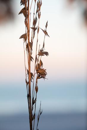 beach flowers.jpg