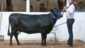 Ohio Valley Dexter Breeders Show & Sale May 14 -15