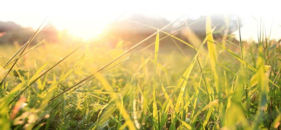 dexters today facebook banner grass.jpg