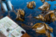 Sea This.jpg