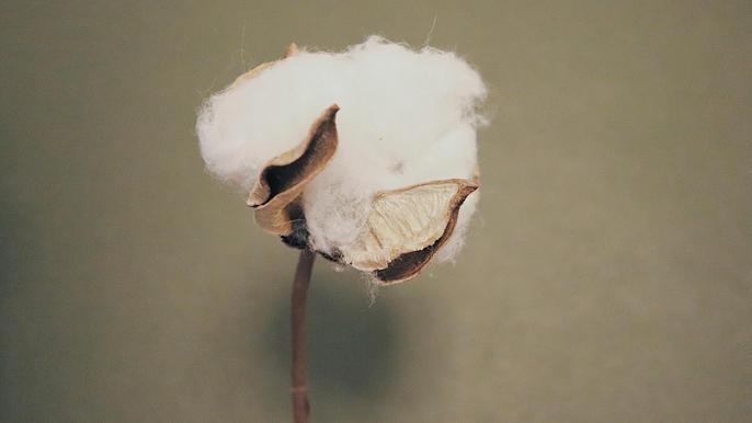 Made with 100% Organic Turkish Cotton