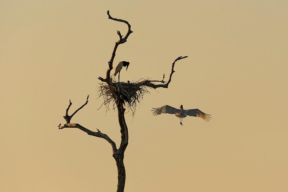 Pantanal3.jpg