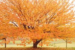 Dancing Leaves (H)